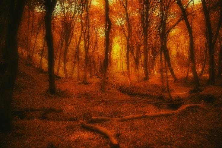 AutumnWoods - autumn forest