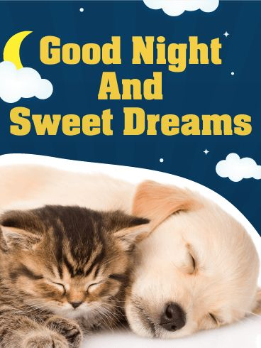Sweet Dreams - Good Night Wish Card: Sleepy puppy, sleepy kitty! They are so sweet as they snooze together. Send this good night card for sweet dreams and to wish someone a good night. They will feel all warm and snuggly inside just like these two furry friends. Have you ever seen a more precious greeting card? This one has all the feels. We can feel our eyes start to droop, and our head begin to nod already!