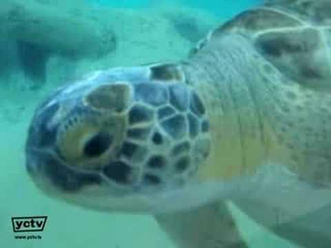 Mote Aquarium Sarasota Florida Sarasota Fl