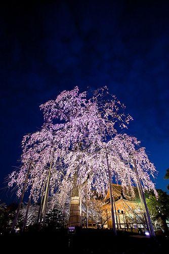 東寺 #japan #kyoto