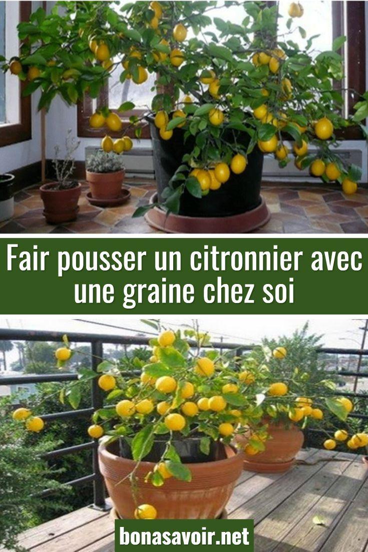 Epingle Par Maya Sur Astuces En 2020 Culture Des Legumes Trucs Et Astuces Jardinage Faire Pousser Un Citronnier