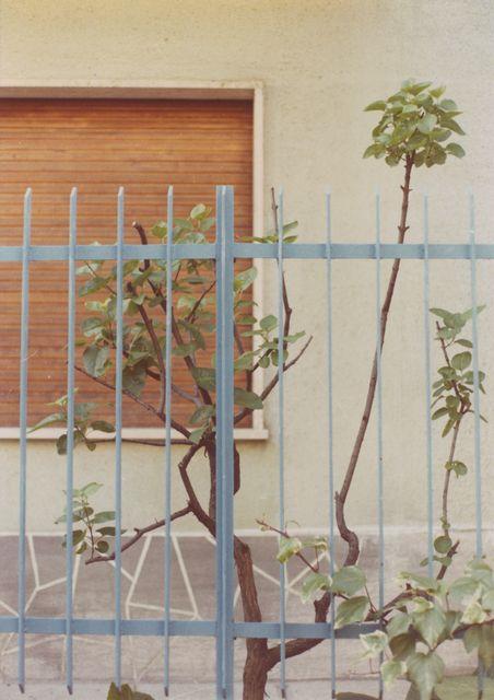 Luigi Ghirri Modena (Serie: Colazione sull'erba), 1973  C-print, vintage 6 9/10 × 4 4/5 in, 17.5 × 12.3 cm