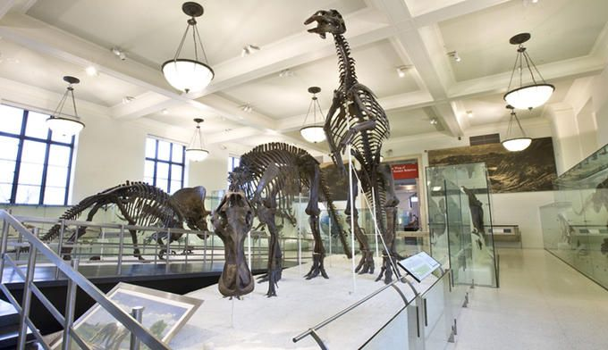 American Museum of Natural History Dinosaurs in the Hall of Ornithischian Dinosaurs