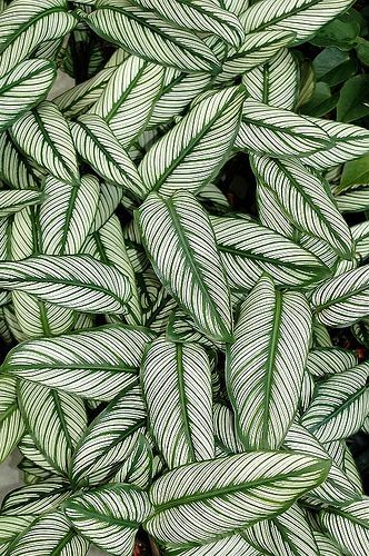 Beautiful leaf patterns