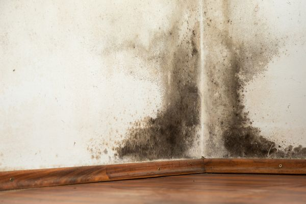 The Definitive Guide to Black Mold Removal | Black mold is a no-go, for more than just health reasons. Use this guide to remove black mold from your home and live a safer, healthier life! #HomeMattersBlog