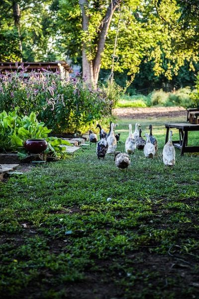 Ducks at Eden East Restaurant at Springdale Farms | Austin, TX | Elizabeth Winslow for Camille Styles