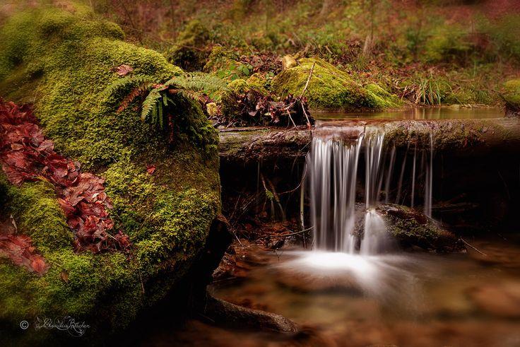 https://flic.kr/p/FtzhJS | Dorfbach in Fällanden / Creek in Fällanden ZH Switzerland (Explored...thank you so much!) ♥ | Ein wunderschöner, romantischer Bachlauf der mich sehr gut gefällt, ich werde sicher bald mal wieder dort anzutreffen sein! Ich wünsche euch ein tolles Wochenende.   A beautiful, romantic creek pleases me very well, I will be sure to meet there soon again! I wish you a great weekend.  Thank you very much for all the likes and comments :-))