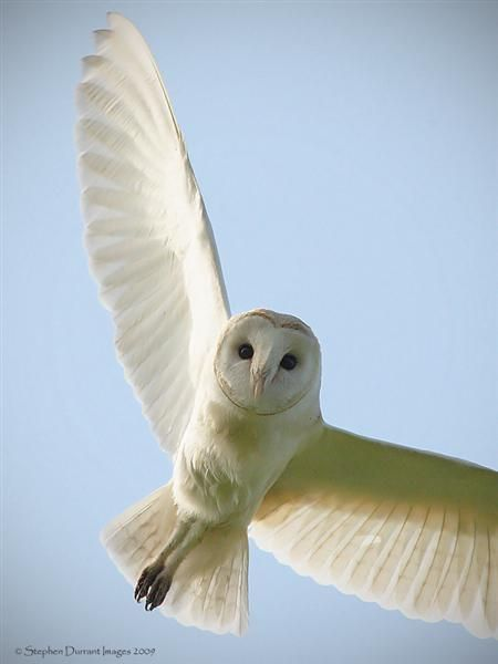 owls in flight pictures | Make / Canon Model / Canon EOS-1D Mark III