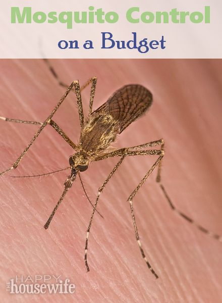 Use these simple and frugal steps to help keep mosquitoes at bay this summer! | The Happy Housewife