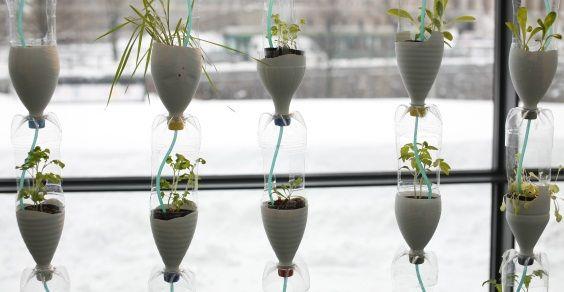 Costruire un orto urbano sulla finestra riciclando le bottiglie di plastica