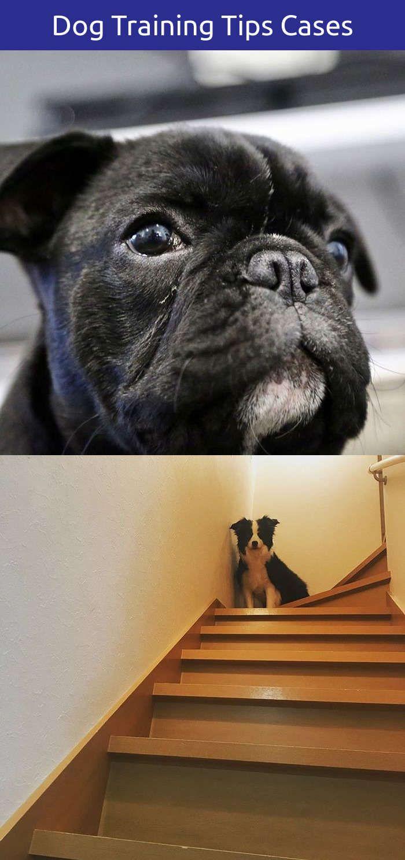 Funny dog quotes tumblr training dogs yards pinterest training