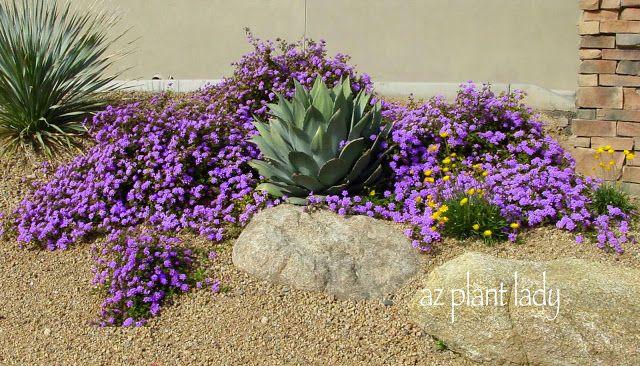 Desert gardening. Hot weather thriving plants.