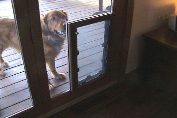 MaxSeal IN-Glass Pet Door  Through the Glass Dog Door   Pet Door Model  I need this!