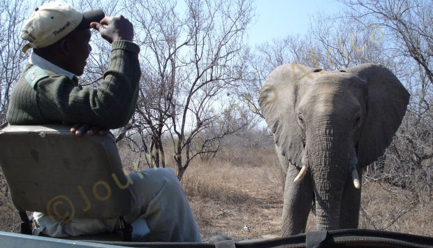 Botswana offers the greatest Elephant population in Africa, safari packages in Botswana are magnificent and a must see.
