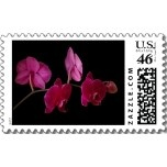 $18.95 Pink Dendrobium Orchid on Black - Customized Stamps