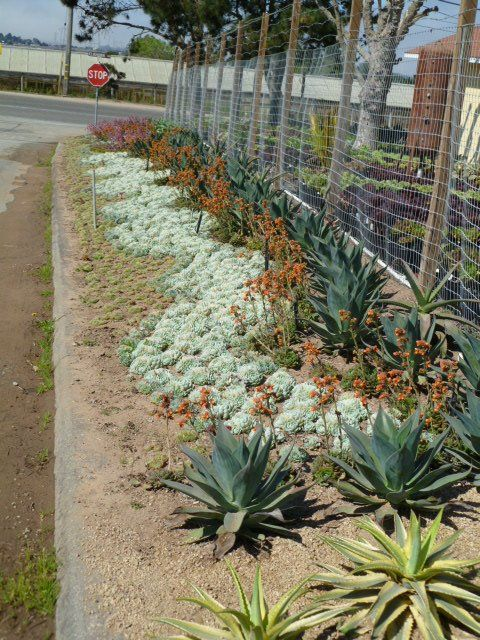 Succulent Gardens Nursery. For around the hot tub maybe