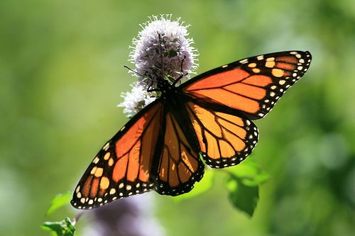 Google Image Result for http://www.photographyblogger.net/wp-content/uploads/2010/09/butterfly3.jpg
