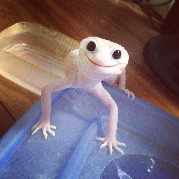 The happiest little Gecko - more at megacutie.co.uk