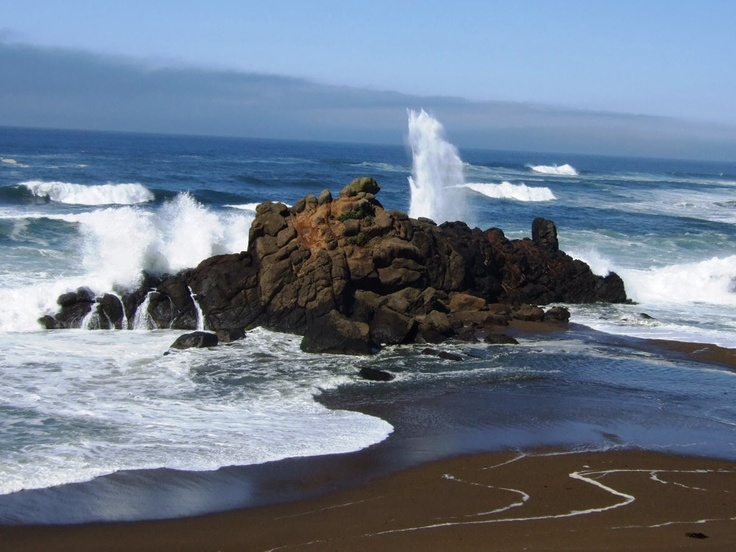 11 Best Images About Depoe Bay Or On Pinterest Whales