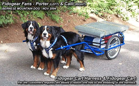 Dog Carting Harness | Cart Harnesses | Padded Dog Harnesses