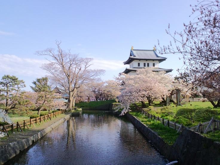 Di Kastil Matsumae ini terdapat beberapa jenis bunga Sakura, yang mekar dengan rentang waktu yang berbeda-beda. Untuk menikmati musim semi di Jepang, Hokkaido bisa dijadikan destinasi yang sempurna melihat keindahan bunga sakura http://www.nusatrip.com/id/tiket-pesawat/ke/tokyo_NRT  #nusatrip #travel #tiketpesawat #hotel #tiketpromo #hotelpromo #promo #diskon #flightdeals #hoteldeals #bestflightdeals  #trip #holiday #sakuraflower #spring #japan #matsumaecastle #hokkaido