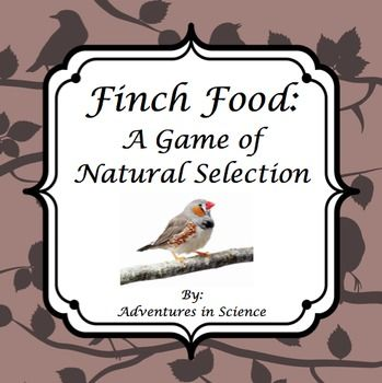 an introduction to the analysis of the evolution of finches Darwin's finches (also known as the galápagos finches) are a group of about fifteen species of passerine birds they are well known for their remarkable diversity in.