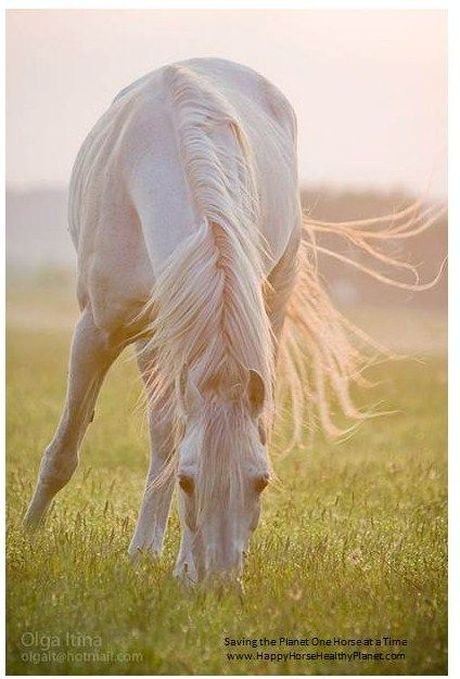 544 best Horse Stuff images on Pinterest Horse, Horse stuff and - free horse bill of sale