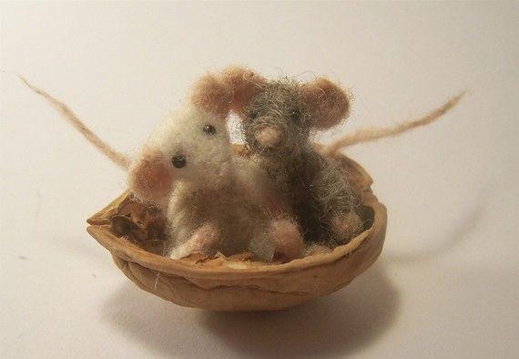 Deux petits écrous dans une coquille de souris