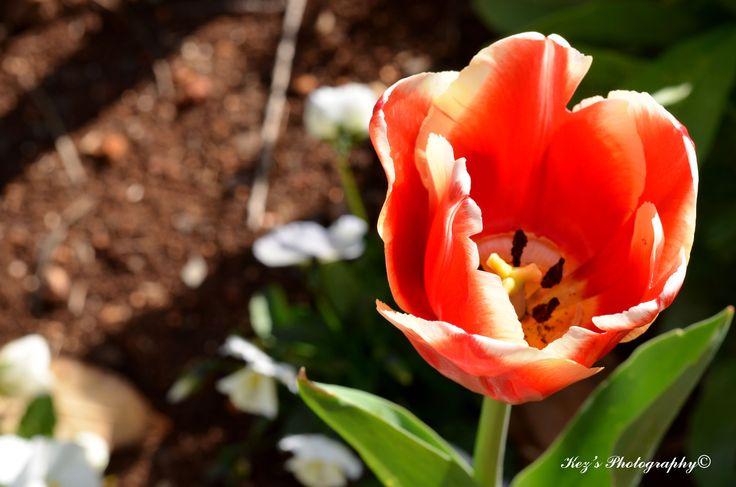Botanical Gardens, Toowoomba
