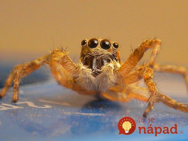 7 tipov ako vyhnať pavúky z vášho bytu