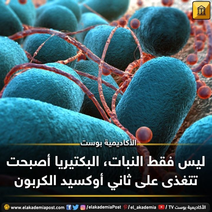 ليس فقط النبات البكتيريا أصبحت تتغذى على ثاني أوكسيد الكربون حيث أدى تطور صناعي موجه الي جعل البكتيريا تتغذي على ثاني أكسيد الكربون من الهواء ال Blueberry Fruit