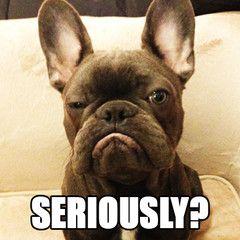 Frank's World - French Bulldog, via mannythefrenchie,