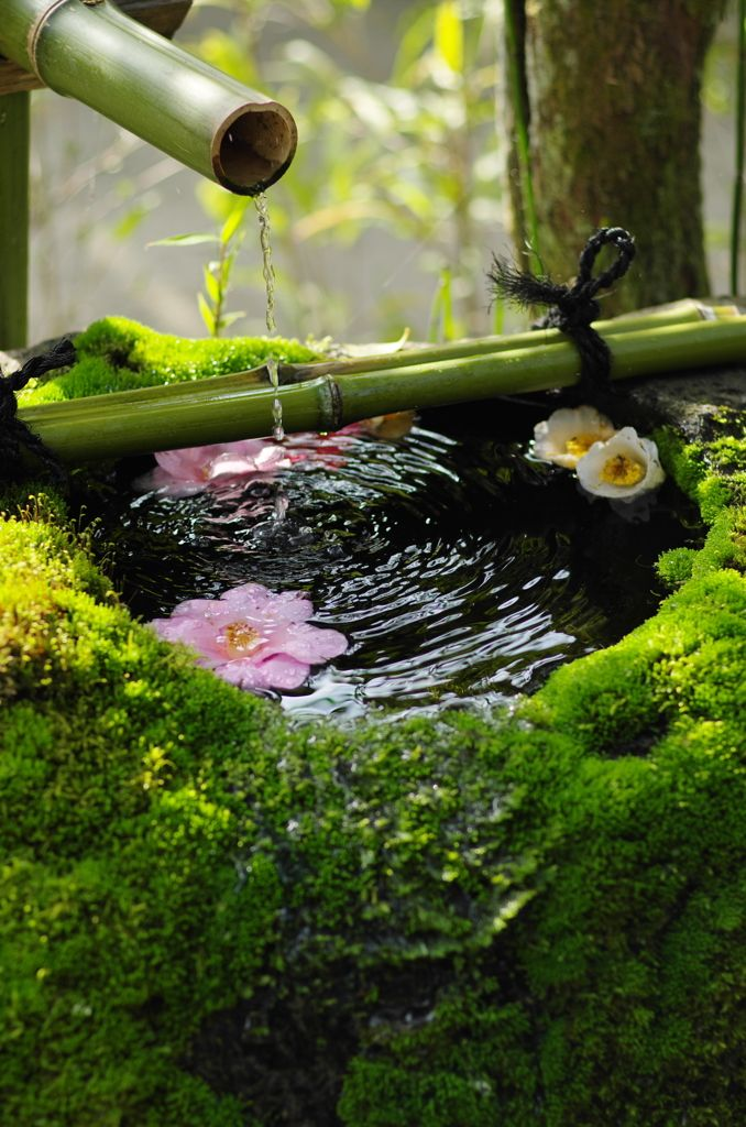 Japanese Zen Garden Water 231 best japanese gardens images on pinterest | japanese gardens