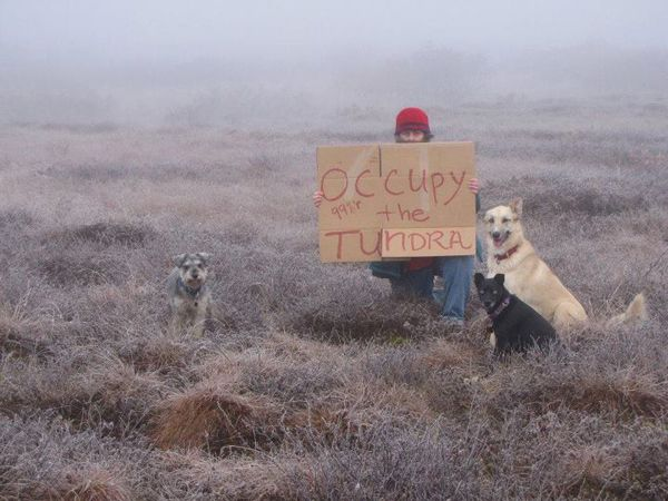 "'Occupy the Tundra': One woman's lonely vigil in bush Alaska -----  She is standing alone with her dogs with an early frost on the grass, staking her claim as part of the 99%. ""Occupy the Tundra,"" says the sign she holds, hand-lettered on an old piece of cardboard.    Thousands of Americans are occupying Wall Street and various plazas, parks and squares across America. Diane McEachern has made sure that Bethel, Alaska -- a town of 6,400 way out in western Alaska -- is among them.  (click…"