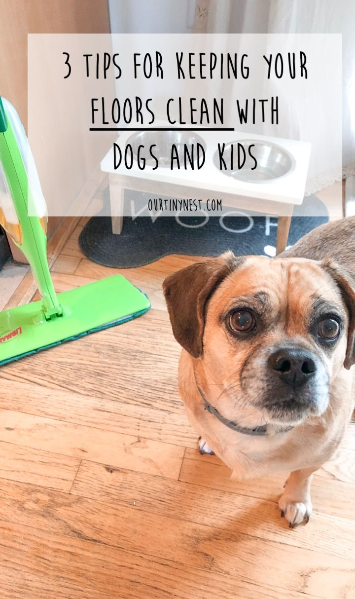 Keeping Your Floors Clean With Dogs And