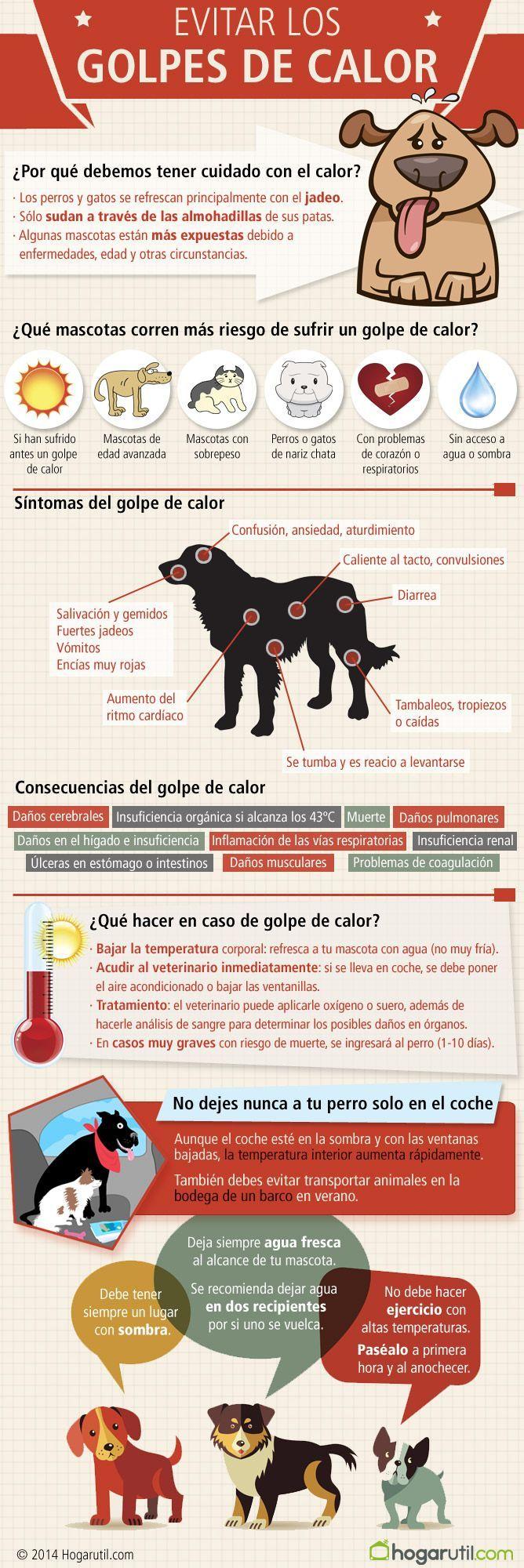 Qué hacer si tu mascota sufre un golpe de calor #mascotas #perros #calor