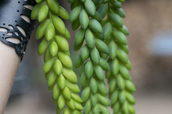 Pin On Green Houseplant Ideas