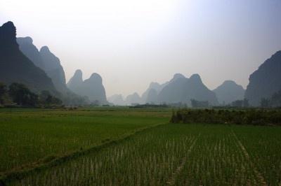 China Shuts Down GE Rice?