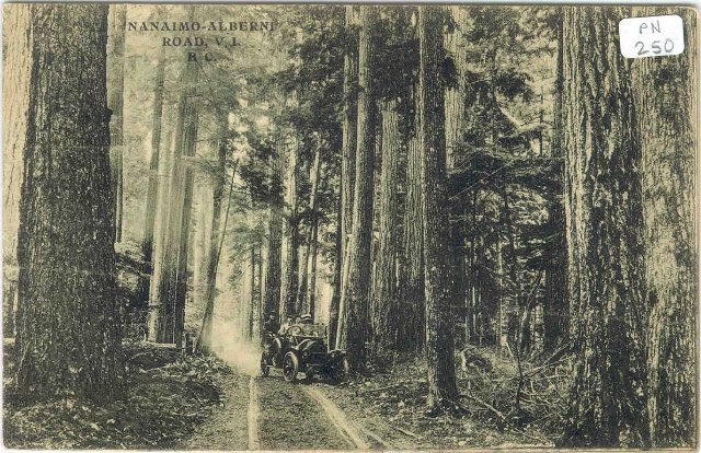 """Alberni Valley Museum has a great vintage postcard of an early automobile among the giant trees of Cathedral Grove. """"Captain George Huff is seen driving an automobile on a dirt track through Cathedral Grove. There are three passengers in the vehicle."""""""