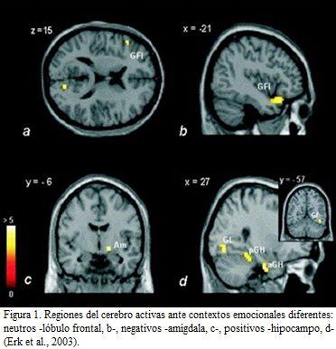 ¿Cuáles son las asignaturas más importantes para el cerebro?