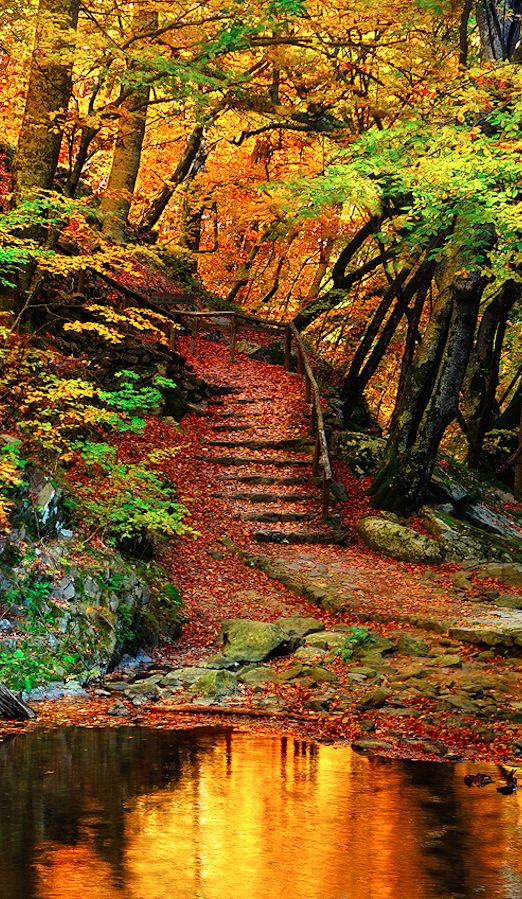 Autumn pond and stairway