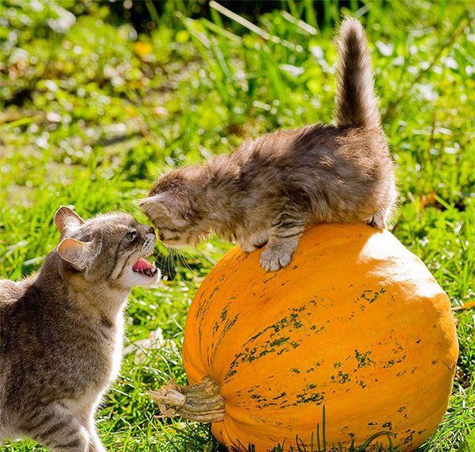 Сделать открытку, открытки для поднятия настроения с животными