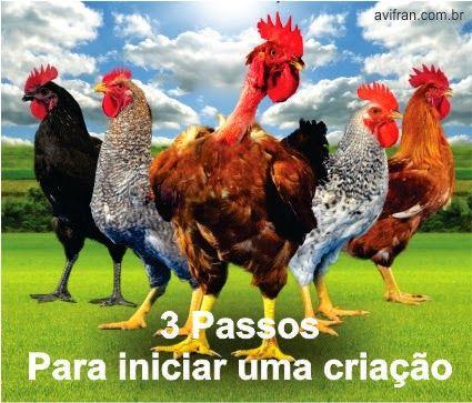 Encontre Dicas de Como criar galinhas ou iniciar uma criação. Construir Galinheiro,Índio Gigante,Manuais,Garnisés