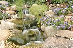 "Orange County Pond Service has been serving all of Southern California since 2001. We grew out of a need to keep ponds and fountains clean and clear for our customers.     We like to take things from ""green to clean"" and then shoulder the responsibility of maintaining that condition for you."