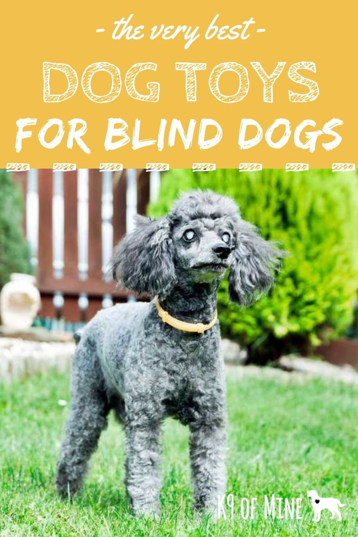 4 Best Toys For Blind Dogs Top Picks For Visually Impaired