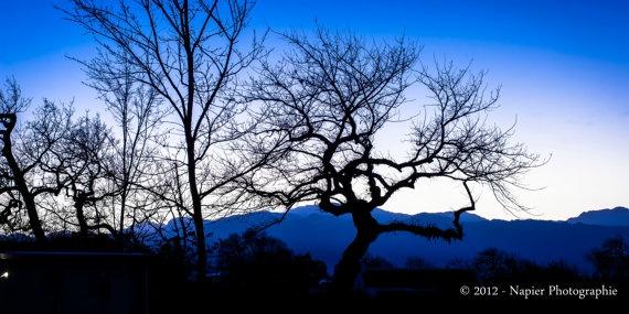 """Blue Morning Babylonstoren"" by NapierPhotographie, $ 115.00 - (original fine art giclee, limited series)"