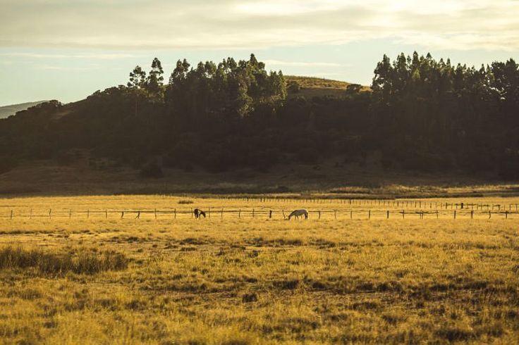 """Una de """"adiós Arauco"""" en pabloembry.com  #picoftheday #landscape_lovers #journeyoflife #trip #campo #forest #viaje #viajes #sur #chile"""