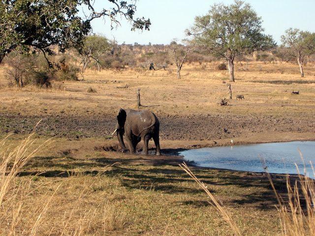 GREAT HUNTING: Obrázky krajiny a zvířat z Jižní Afriky. #South Af...