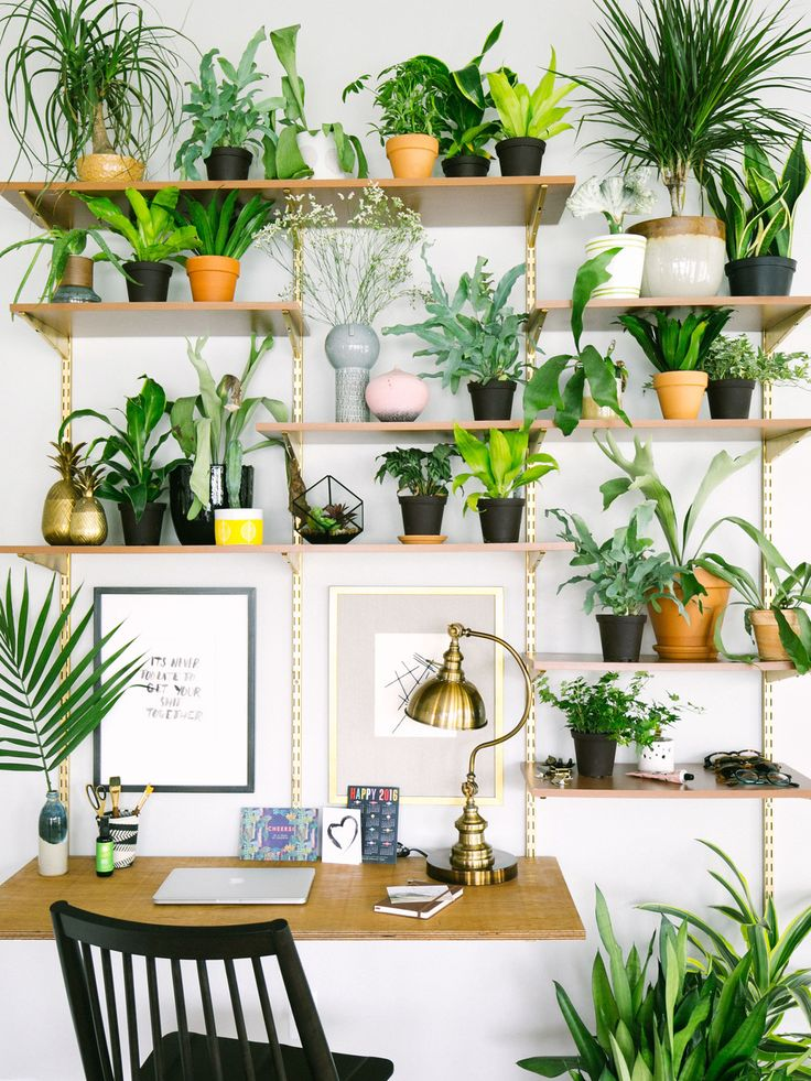 Since our study room gets a ton of light, I decided to create a plant  shelfie. Now, it's so calming and inspiring to work in here!Check out my  latest eBay guide on more beautiful ways to decorate with plants!