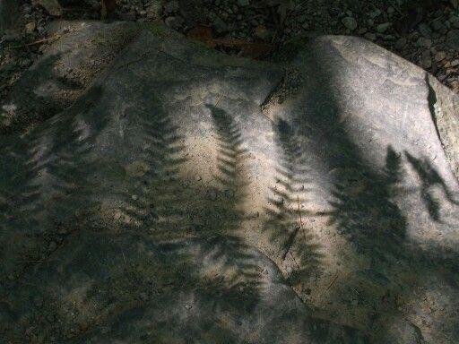 Fern shadow, New Zealand